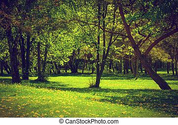 Green spring summer park. Blooming trees, dandelions