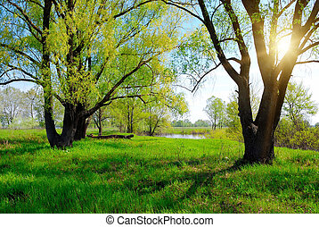green spring tree and sun