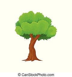 Green spring tree vector Illustration on a white background