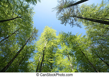 green spring view on tree tops