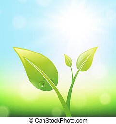 Green Sprout With Leaves Over Sunny Summer or Spring...