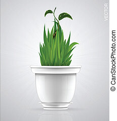 green sprout, flower, herb in the pot
