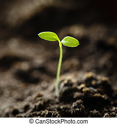 Green sprout growing from seed isolate on white background. ...