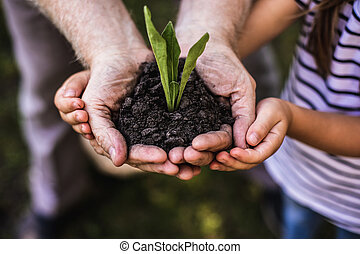 Green sprout growing in hands of adult man and child