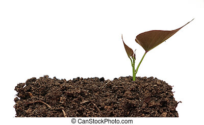Green sprout growing out from soil on white background
