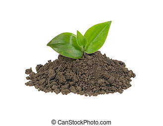 green sprout in a pile of soil on a white background