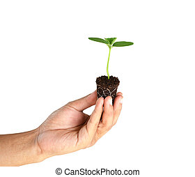 green sprout in man hand