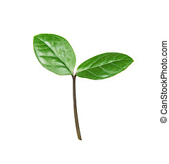 Green sprout on a white background
