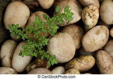 Green sprout plant with stone