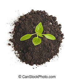 Green sprout plants growing from heap of soil, isolated on a white background. Ecology and hope
