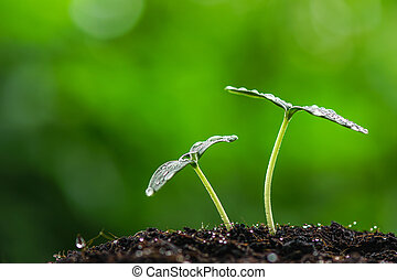 green sprout seed