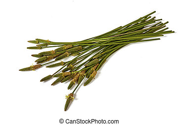 Green Stems Leaves and Mature Seed Pods of Wild Grass