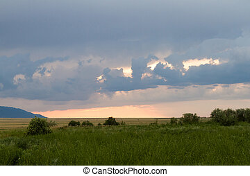 green steppe before rain
