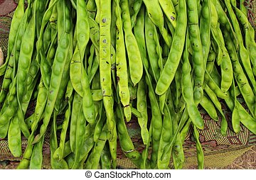 green stink bean of southern thailand (Satoh)