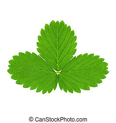 Green strawberry leaves isolated on white