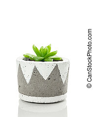 Green succulent plant in a hand-painted concrete pot