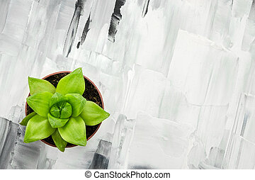 Green succulent plant on abstract painted background