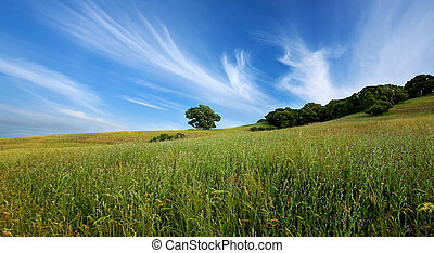 Green summer field and lone tree - Panorama of beautiful...