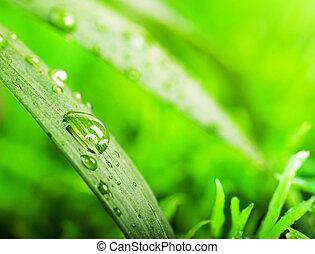 Green summer grass in a sun day