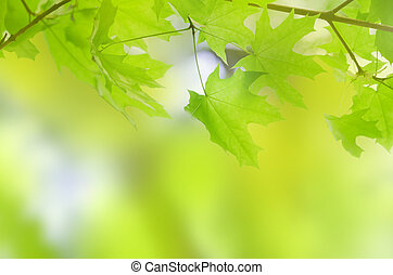 green summer leaves with a blur background
