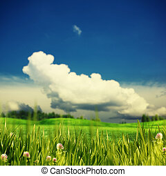 Green summer meadow under the blue skies and white clouds