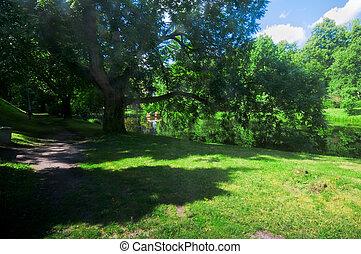 Green summer park