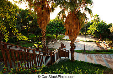 Green summer park in resort town at sunrise