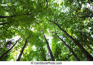 green summer trees in the woods or forest