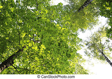 Green summer trees on sky background
