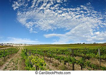 Green Summer Vineyard