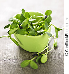 Green sunflower sprouts in a cup - Organic green young ...