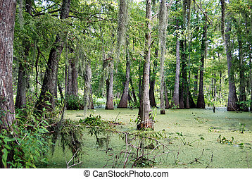 Green Swamp Bayou - Trees with Spanish Moss in a Swamp.Bayou