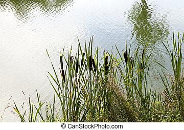 green swamp, close-up