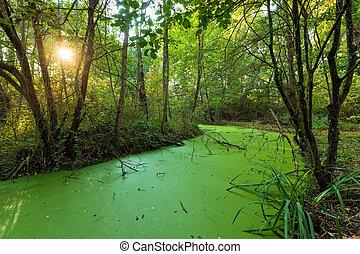 Green swamp land
