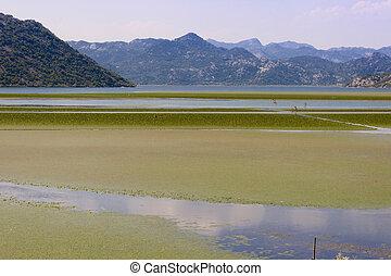 Green swamp - Montenegro