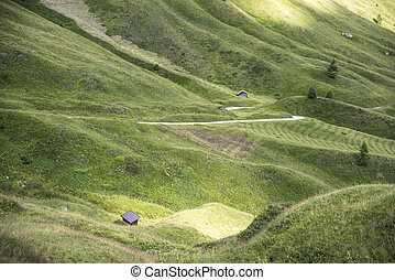 green swaying fields.Dolomites, Alps, Italy