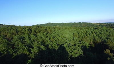 Green tall trees - An aerial shot of tall trees. The shot is...