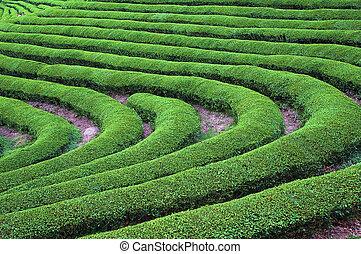 Green Tea Bend