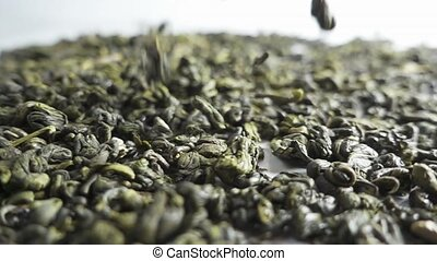 Green Tea Falling on White Background. Slow Motion