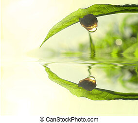 green tea leaf concept photo - Snail on tea leaf with...