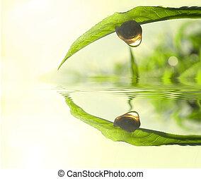 green tea leaf concept photo - Snail on tea leaf with...