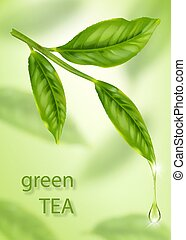 Green tea leaf isolated on bokeh background