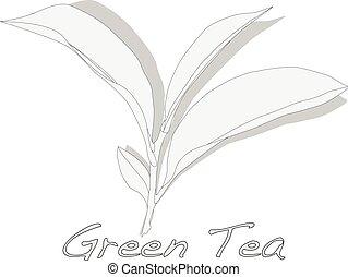Green tea leaf vector artwork isolated