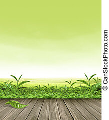 green tea leaves on Wooden floor with green tea Plantation and green sky background