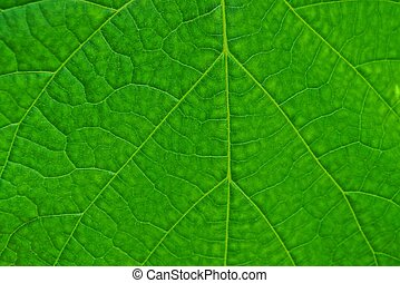 texture from a piece of a large leaf