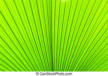 Green texture of palm tree leaf. Nature background