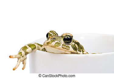 Green toad in white cup isolated