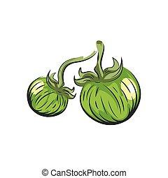 green Tomato vector drawing icon watercolor