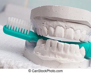 Green toothbrush with dental gypsum