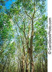 green tree against blue sky